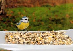 Wild Bird Feeds & Feeders